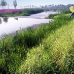 1 – A Mother River Recovered – The Sanlihe Greenway