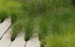 curso cubiertas verdes