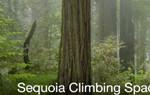 Sequoia Climbing Space